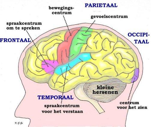 functiestoornis hersenen